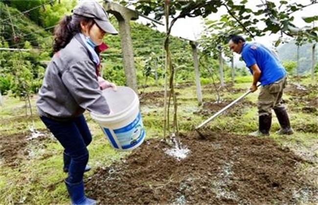 猕猴桃施肥时间 猕猴桃施肥