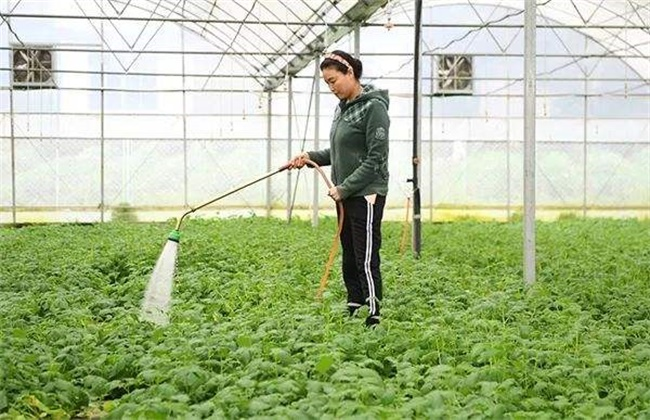 冬季大棚蔬菜管理要点