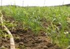 秋季韭菜该怎么育苗