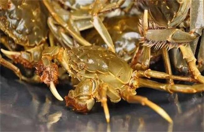 螃蟹高产养殖注意事项