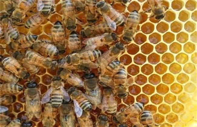 中蜂蜂群合并原则