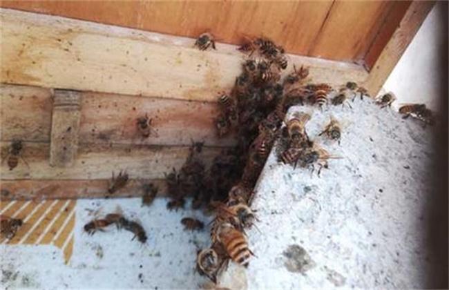 蜜蜂越冬饲喂方法和注意事项