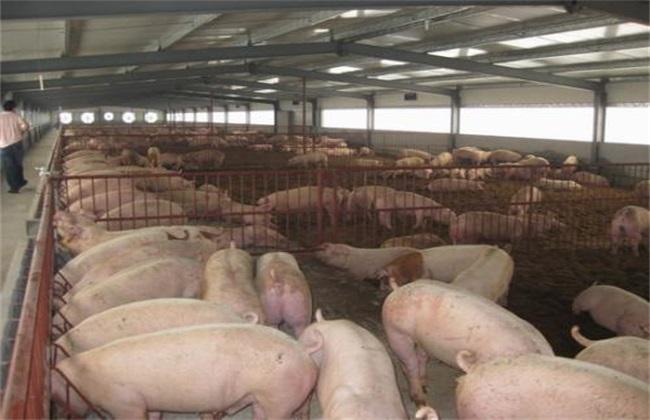 冬季养猪温度 冬季养猪适温