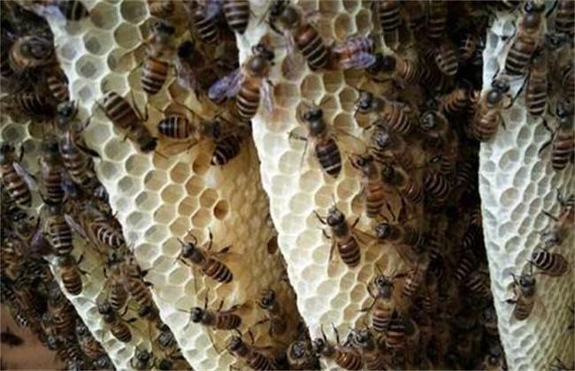 蜂箱蜂群水分过多该怎么办