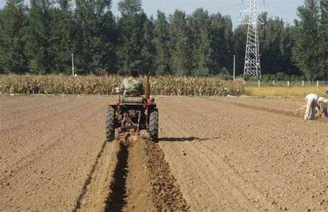 小麦播种过深该如何补救