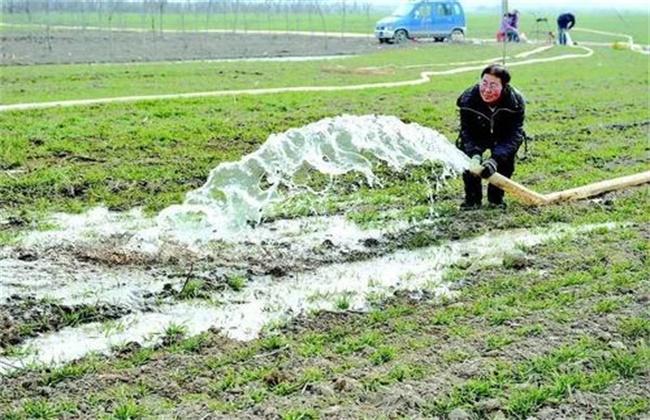 如何浇好小麦越冬水