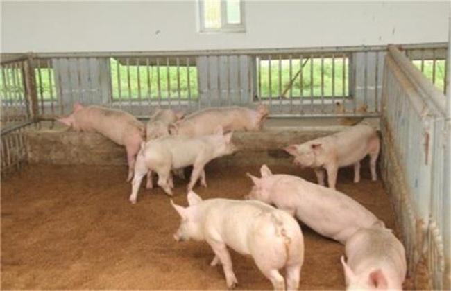 环保养猪技术