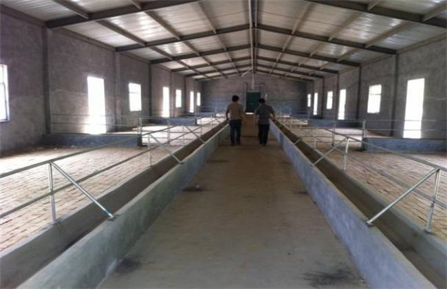 小型养羊场的常见问题