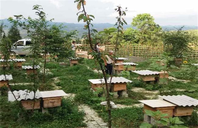 蜂群达不到采蜜群势的补救方法