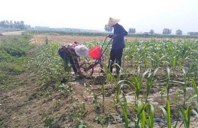 玉米 施肥要点 玉米施肥