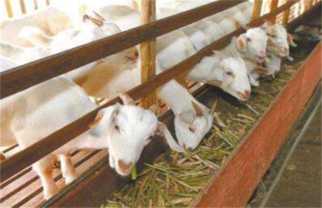 冬季养羊 防疫要点