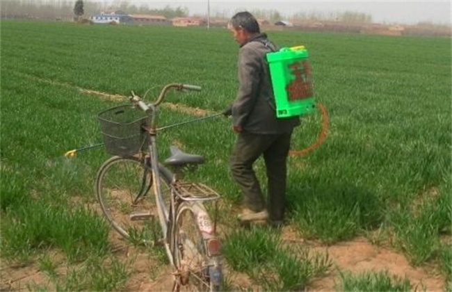 小麦冬前除草注意事项