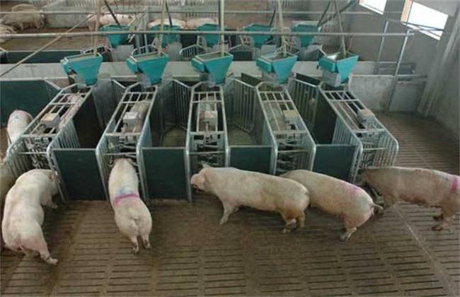 现代化养猪场址选择 注意事项