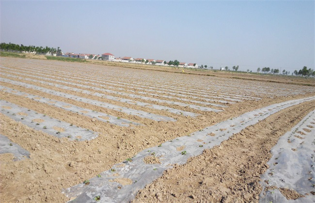 棉花种植前 准备工作