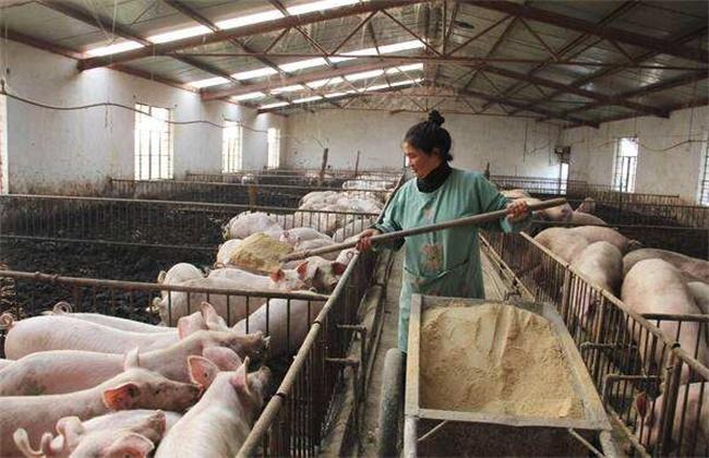 猪场降低饲料霉变的措施