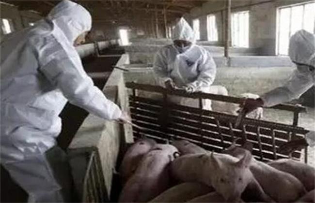 秋冬季养猪场防疫要点