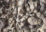 猪苓价格多少钱一斤