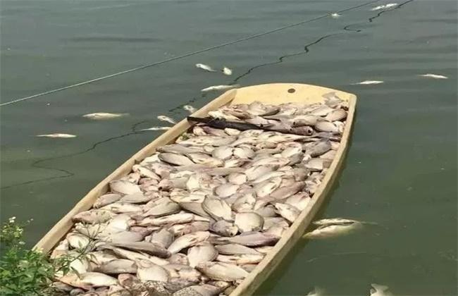 冬季鱼塘泛底原因及防治措施