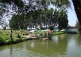 池塘怎么养鱼不容易死