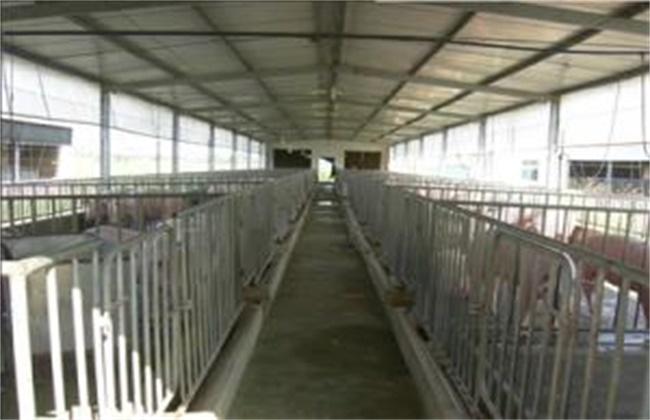 冬季猪场饲养管理要点