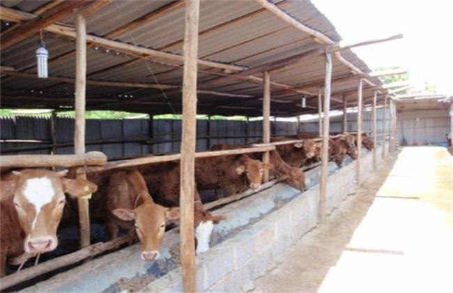 养牛场环境卫生管理工作