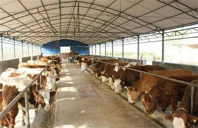 养牛场 环境卫生 管理工作