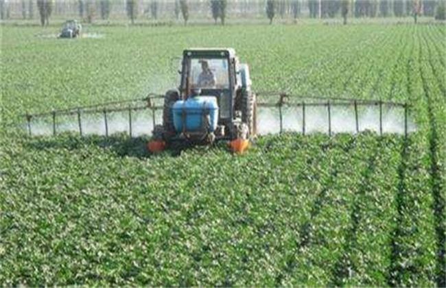 叶面肥种类和使用方法