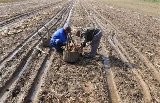 土壤酸化的原因及解决措施