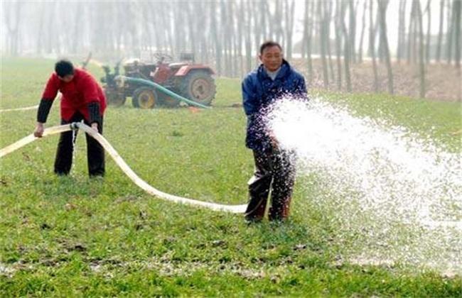 小麦冬灌好处和注意事项
