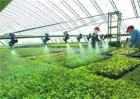 冬季棚室蔬菜的浇水原则