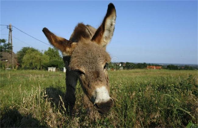 驴驹运输到家后要注意什么