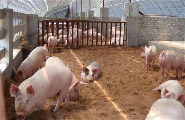 非洲猪瘟后 如何复养