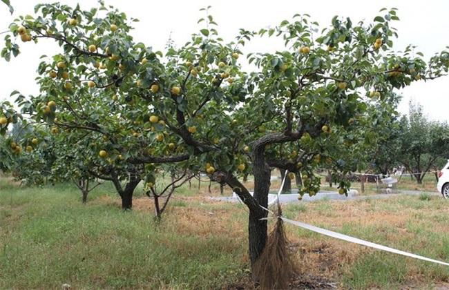 果树 土肥水管理 四大误区