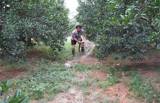 果树 大水漫灌 危害
