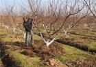 果树土肥水管理常见的四大误区