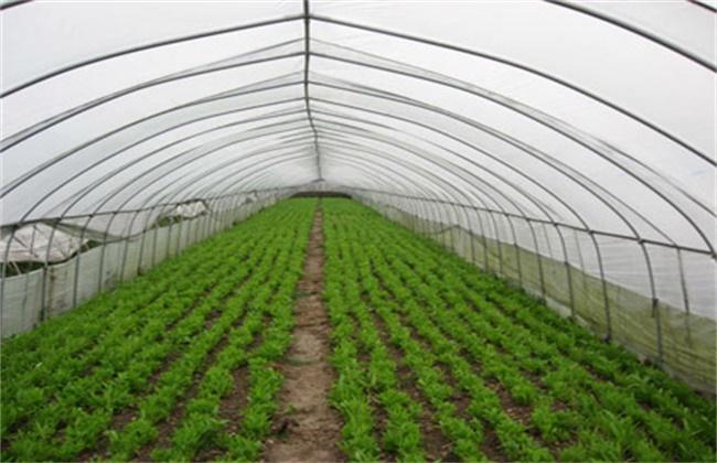 冬季大棚蔬菜管理误区