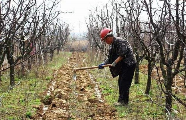 果园 土壤板结 怎么改善