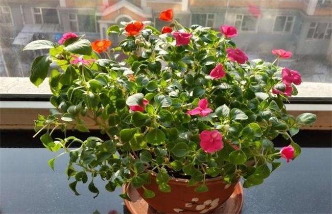 水梅花的养殖方法和注意事项