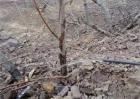果树冬灌什么时间最好