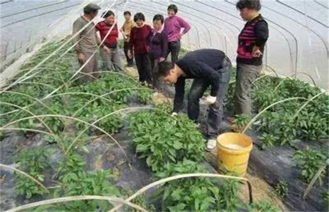 冬季蔬菜药剂灌根方法和注意事项