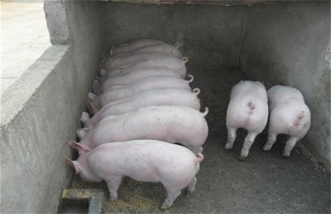 仔猪生长速度慢 原因