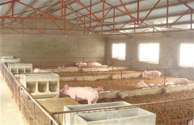 发酵床冬季养猪注意事项
