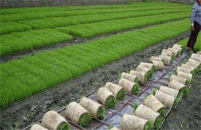 早春蔬菜定植前后管理要点
