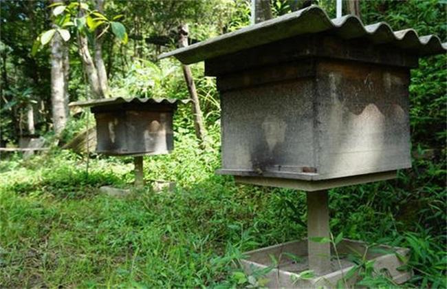 蜜蜂安全越冬措施