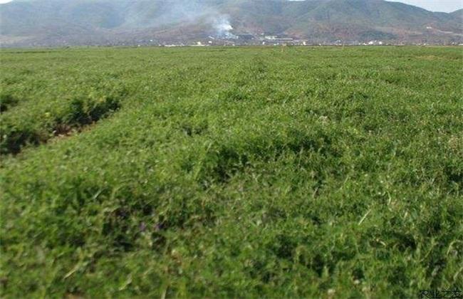 绿肥 有什么作用