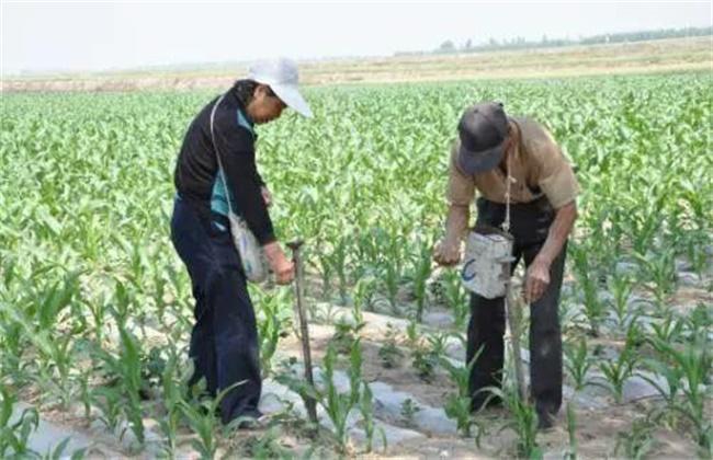 冬季农作物肥水管理要点