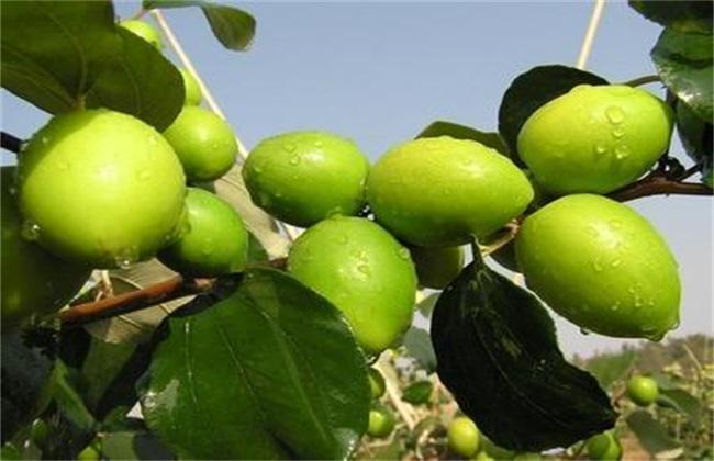 农村水果种植面对的难题