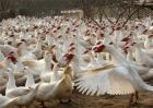 2020农村养殖什么赚钱