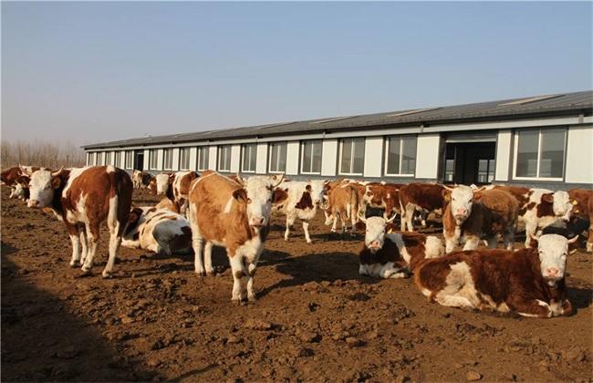 牛肉价格 多少钱一斤
