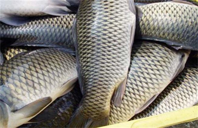草魚多少錢一斤